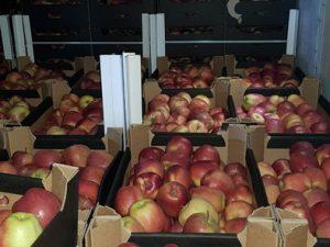 В Смоленской области задержано более 60 тонн товаров из списка продуктового эмбарго