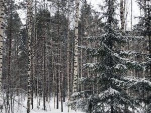 В Смоленской области подвели итоги государственного лесного и охотничьего надзора в 2018 году
