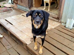 Смоленский приют для бездомных собак оказался под угрозой закрытия из-за болезни хозяйки