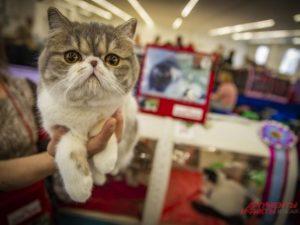 Самую красивую кошку Смоленска выберут в режиме онлайн