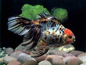 Все что нужно для содержания аквариумных рыбок