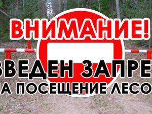 Смолянам запретили отдыхать в лесу на майских праздниках
