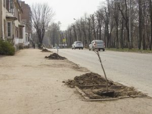 Аллею каштанов высадили в Смоленске