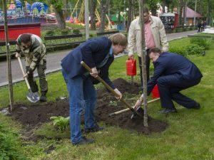На центральной аллее Лопатинского парка высадили краснолистные яблони
