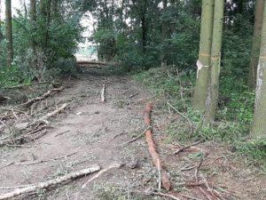 В Смоленской области расчистили место под «Становище Бужа»