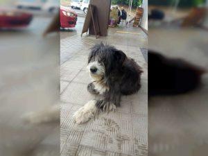 В Смоленске дети изувечили потерявшуюся собаку