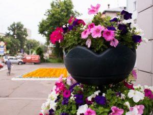 Жители Смоленска возмутились проехавшимся по клумбе автомобилистом