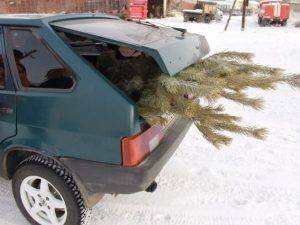 Акцию по охране хвойных деревьев проводят в Смоленской области