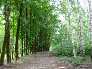 Дорогу собираются построить у парка Реадовка в Смоленске
