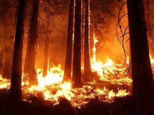 Лесной пожар произошел в Ельнинском районе