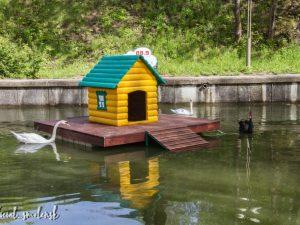 В Смоленске установили обновленные домики для лебедей в «Лопатинском саду»