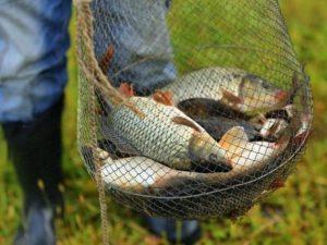 Смолянина стали подозревать в незаконной рыбалке на озере Баклановском