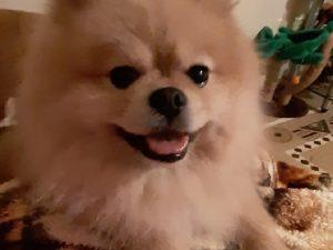 Полицейские нашли и вернули смолянке похищенную собаку