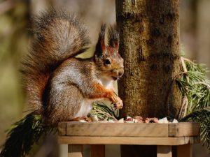 Смоленский зоопарк заявил о старте благотворительной акции