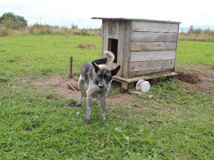 В Смоленской области разрабатывают закон о защите бездомных животных