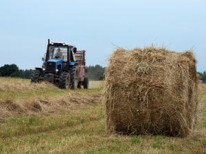 Смоленские фермеры смогут принять участие в конкурсе на получение гранта