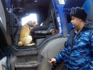 В Смоленской области служебный пес УФСИН не дал провезти наркотики в колонию