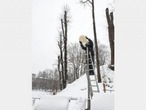 Новые светильники устанавливают в «Лопатинском саду» в Смоленске