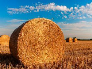 ВТБ в Смоленской области нарастил кредитный портфель по льготной программе Минсельхоза в 2,5 раза