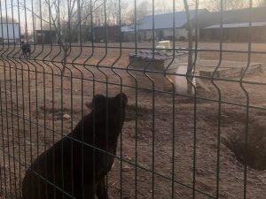 Смоленский приют для бездомных животных отказался принять оставшихся без присмотра собак