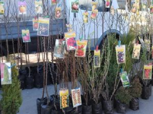 В Смоленске пройдет традиционная ярмарка «Сад – огород»
